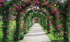 Die berühmten Rosenbögen im Rosenneuheitengarten Baden-Baden