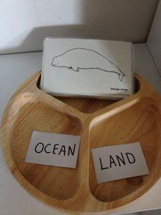 Montessori Preschool land and ocean animal sorting