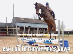 This horse really wants to fly apparently
