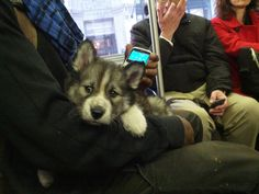 Anyone who gets to sit next to this heavenly face. | 26 People Having A Better Commute To Work Than You