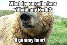 18 Jokes That Will Definitely Make You Groan. Some of these are too stupid for words and some would be super funny for kids. 18 Jokes That Will Definitely Make You Groan. Some of these are too stupid for words and some would be super funny for kids. Animal Jokes, Funny Animals, Animal Sayings, Animal Captions, Cheesy Jokes, Jokes And Riddles, Stupid Jokes, Lame Jokes, Def Not