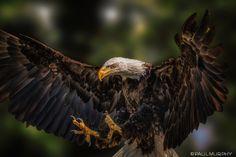 EagleLanding