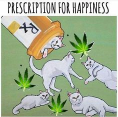 All you need is cats and marijuana! Cats for love and companionship, and marijuana for safe, calming, and making one's life pleasant. Get: MARIJUANA - Guide to Buying, Growing, Harvesting, and Making Medical Marijuana Oil and Delicious Candies to Treat