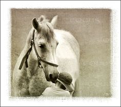 More than Friends Horses, Album, Digital, Friends, Gallery, Animals, Picasa, Amigos, Animales
