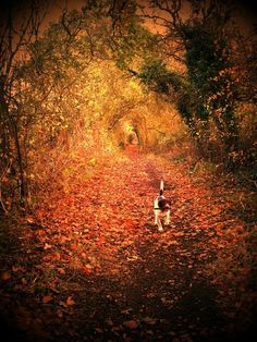 Little Dog's, Autumn Walk In The Woods.