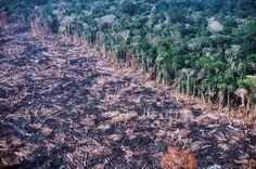 Deforestation. A spe