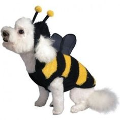 dog bumble bee costume httpbarnaclebillhubpagescomhub - Yosemite Sam Halloween Costume