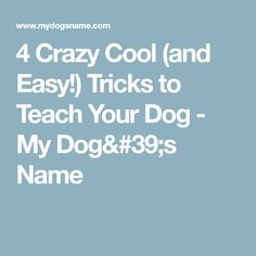 4 Crazy Cool (and Easy!) Tricks to Teach Your Dog - My Dog's Name