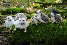 Family hedgehogs completely.