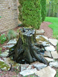 Which Tree Natural Purifier Of Water
