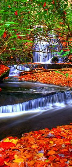 Grogan Creek Waterfall, Pisgah Forest, USA