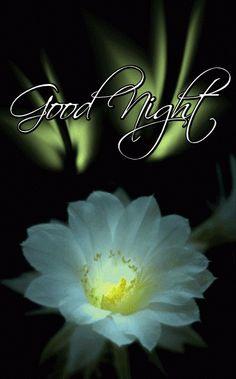 Good Night my precious friends Beautiful Good Night Images, Cute Good Night, Good Night Messages, Night Love, Good Night Sweet Dreams, Good Night Quotes, Good Morning Good Night, Day For Night, Love Images