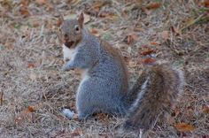 Surprised Squirrel by Out.of.Focus, via Flickr