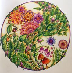 Johanna Basford | Enchanted Forest - Flowers & Leaves using Polychromos pencils