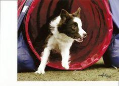 Dog agility training at home?