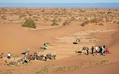 Marokko #Marokko, #Reisen, #Wüste, #Kamel, #Dromedar, #Sahara