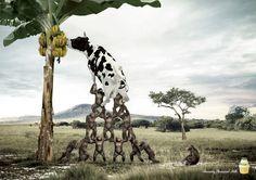Binggrae Banana flavored milk: Grassland