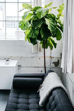 Big plant! Workspace inspiration: the Everlane studio. Photo Luke beard.