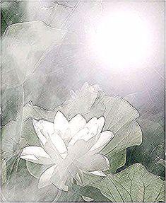 Flower White Flower White White Lotus Flower Sun Rise Green Background Img 3746 زهرة اللوت White Lotus Flower White Flowers Green Backgrounds