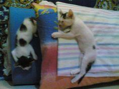 mu (he) & mia -  ging2 siblings - their mom was kat2.