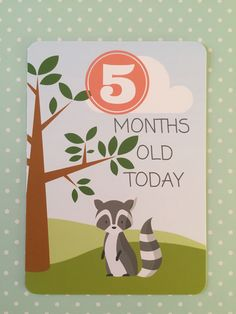 5 Months Old. Baby Milestone cards. www.memorymakercardshop.etsy.com