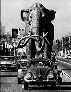 A life-size imperial mammoth is towed behind sculptor Howard Ball's 1958 Volkswagen for installation at La Brea tar pits on Jan. 18, 1967. °
