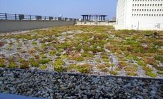 1425 K St. - dc greenworks featured green roof; see more at dcgreenworks.org