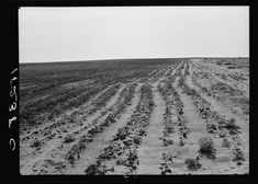 13 Vintage Photos of the Dust Bowl Early Settler, Dust Storm, Dust Bowl, Great Depression, Poster Size Prints, Vintage Photos, Texas Image, Landscape, Outdoor