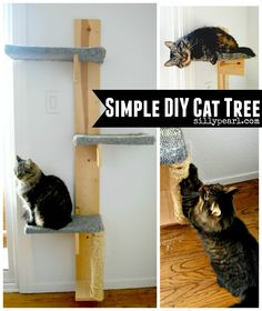 How to make a simple and inexpensive DIY cat tree with just a few cuts of wood and a few other supplies. Easy project to help you practice your DIY skills.