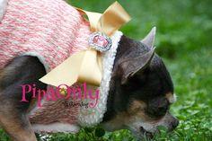 Bienvenidos a Pipa Only Fashion Dog