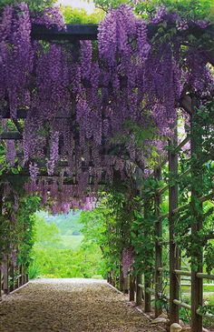 I LOVE LOVE LOVE walk ways with flowers and vines. Wisteria is my favorite but jasmine is great too. Anything that drapes with color.