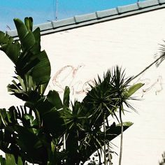 Tropical vibe in this old beach house in Peregian Beach. Tropical Vibes, Beach House, Plant Leaves, Culture, Cool Stuff, Architecture, Plants, Design, Art
