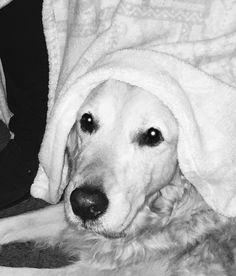 Hunde Foto: Ingrid und Jackie - Kuschelhund Jaqueline ❤ Hier Dein Bild hochladen: http://ichliebehunde.com/hund-des-tages  #hund #hunde #hundebild #hundebilder #dog #dogs #dogfun  #dogpic #dogpictures