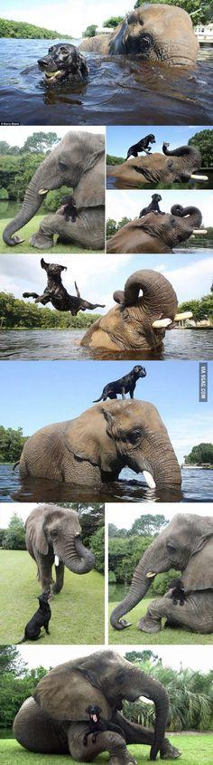 Natural buddies, dog and elephant