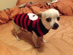 Skippy's Fantastic Pirate Skull Dog Sweater