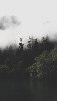 Nature/Landscape This photo has a lighter background, but a darker foreground, creating a sense of mystery, in this dark forest. Foggy Forest, Dark Forest, Tree Forest, Night Forest, Misty Forest, Fantasy Forest, Cool Wallpaper, Wallpaper Backgrounds, Forest Wallpaper Iphone