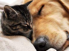 猫と犬の仲良し画像 05|ねこLatte+