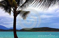 A palm tree and a tranquil tropical beach