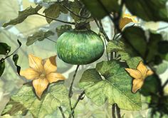 pumpkin  watercolor illust