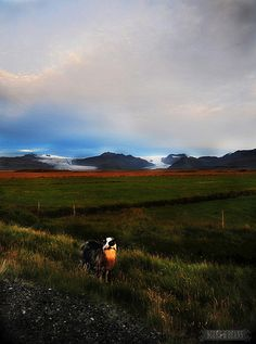 Three Great Tips for Renting a Car in Iceland! >>>What a landscape - best seen by car!