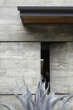 Concrete facade - Agave americana