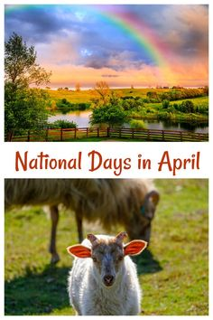 From April Fool's Day to Farm Animal Day and Rainbow Day, there are over 100 national days to celebrate in April. Find them all on Always the Holidays.