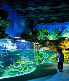 Pet Supplies Smart Undersea Paradise Mini Aquarium With Light By Wan Da New In Box