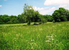 Blütensirup von und zu Wald und Wiese  Arbeit, die sich lohnt! Der Duft der Sommerblüten in einem Sirup versammelt.