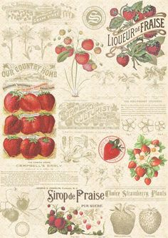 Strawberry Illustration 2 by auRoraBor on DeviantArt - Modern Photo Wall Collage, Picture Wall, Collage Art, Room Posters, Poster Wall, Poster Prints, Vintage Prints, Vintage Art, Illustration Inspiration