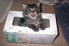 In einem Taschentuch-Spender. | 25 Katzen, die den perfekten Platz zum Entspannen gefunden haben