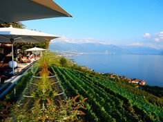 Le Deck at Chexbres - Vineyards, Lavaux