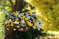 Yep, you really can have those lush, full, awe inspiring hanging baskets in your own garden with these tips and tricks! Plants For Hanging Baskets, Hanging Flower Baskets, Hanging Planters, Wicker Baskets, Container Plants, Container Gardening, Flower Containers, Disney Parks, Small Garden Landscape Design