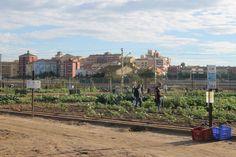 Hortelanos cultivando sus huertos ecológicos. Valencia, Dolores Park, Travel, Veggie Gardens, Growing Up, Viajes, Trips, Traveling, Tourism