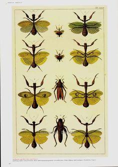 Praying Mantis & Cicada Insects Entomology Vintage Natural History Bug Lithograph Chart Poster Print. $11.89, via Etsy.